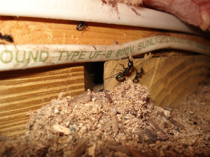 Termites and ants happy homeowners