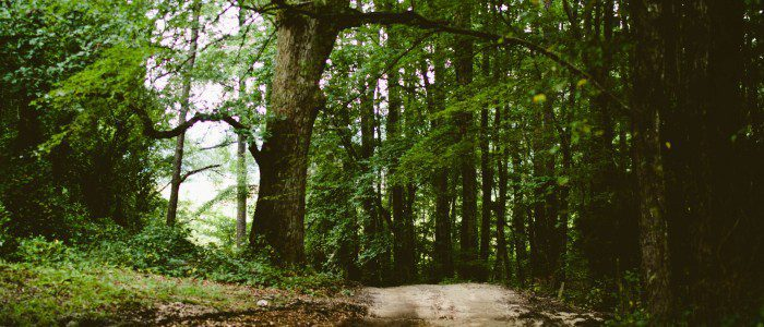 forest-trees-path
