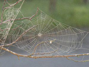 Spider.web