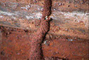 Termite.tunnel